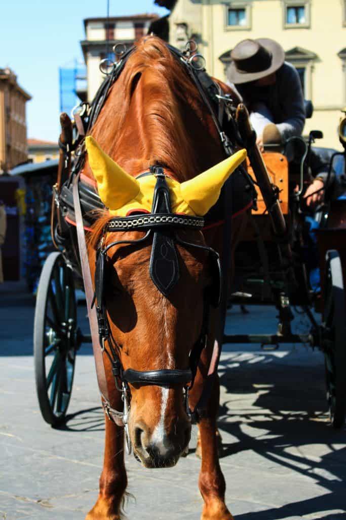 Horse-drawn drayage cart